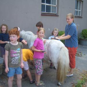 Ponypflege Hof loenne-tiekmann